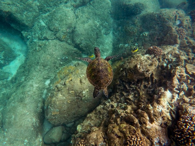 snorkelling-okinawa
